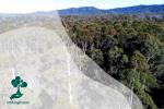 Pemanfaatan Hutan Produksi di Berbagai Aspek