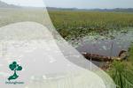Lahan Basah (Wetland) Indonesia