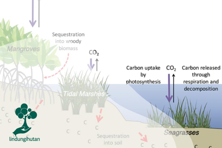 Ekosistem Pesisir dan Perannya Melawan Karbon