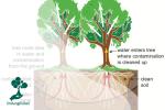 Menangani Permasalahan Polusi Air dengan Metode Fitoremediasi