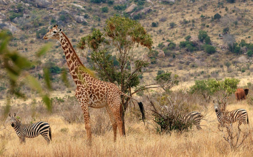 Fauna Hutan Sabana