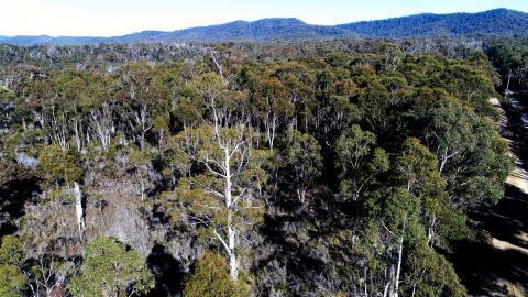 Hutan Produksi
