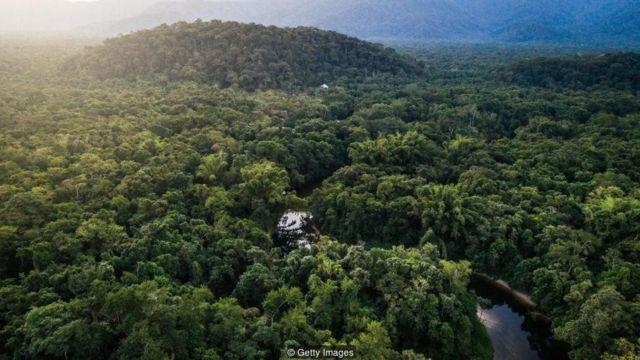 Hutan Indonesia Hijau