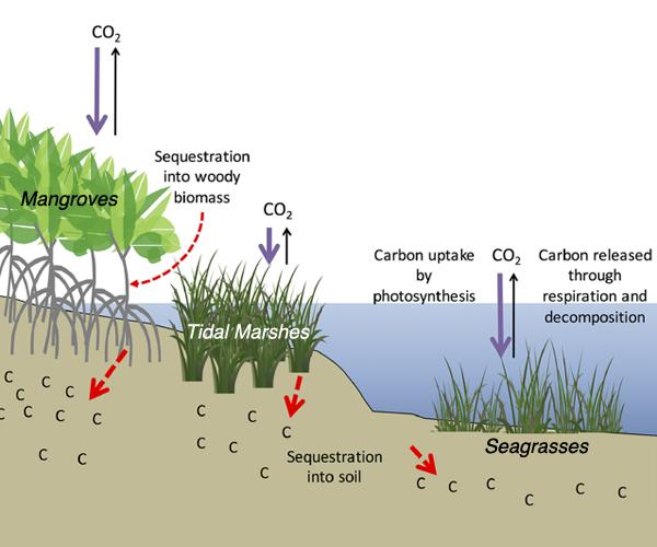 Mekanisme Perpindahan Karbon