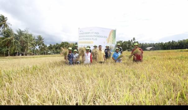 Panen Padi di Indonesia