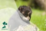 Beruang Andes: Perawat Ekosistem dan Musuh Petani