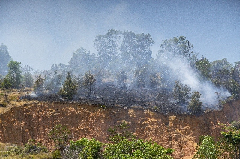 Deforestasi hutan Indonesia seluas 462 ribu hektar pada 2018-2019 Dokumentasi alinea.id