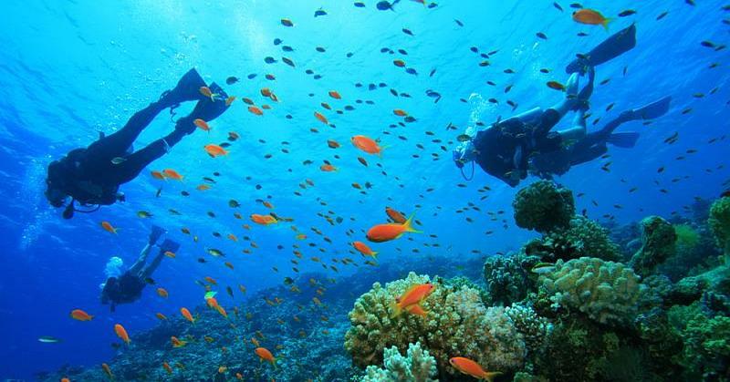 Gambar 1 (https_lifestyle.okezone.com_read_2017_02_09_406_1613600_konservasi-laut-baru-jadi-wadah-lindungi-terumbu-karang)