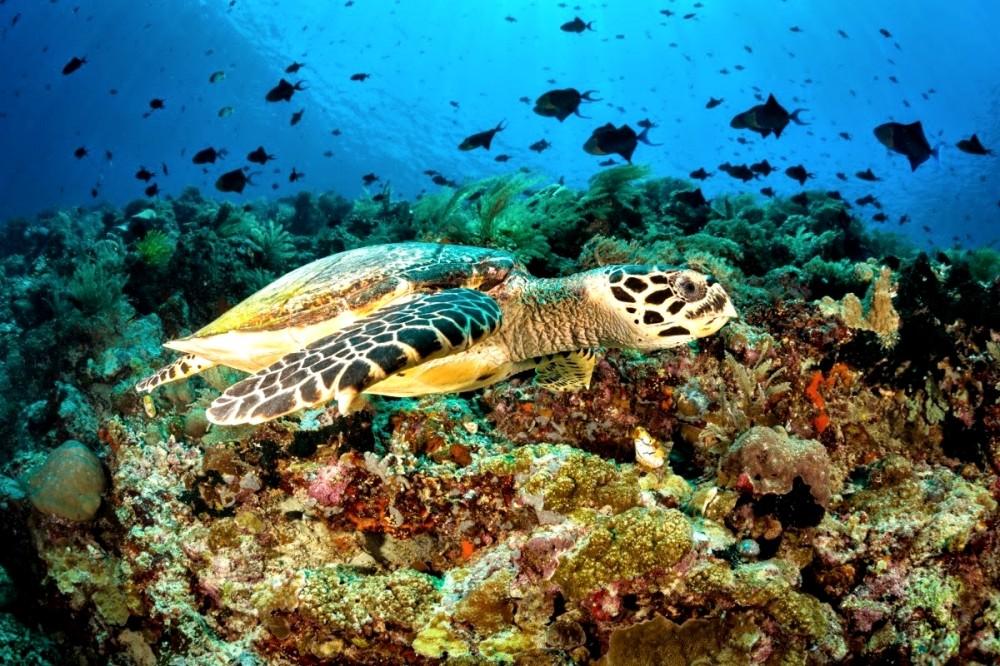 Gambar 4 (https_www.matakota.id_news_44624-keindahan-taman-bawah-laut-bunaken-indonesia)