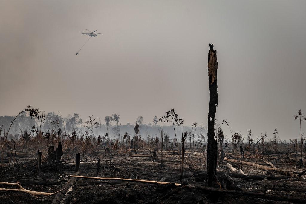 Gambar 4_Kondisi Buruk di Taman Nasional Sebangau, Kalimantan