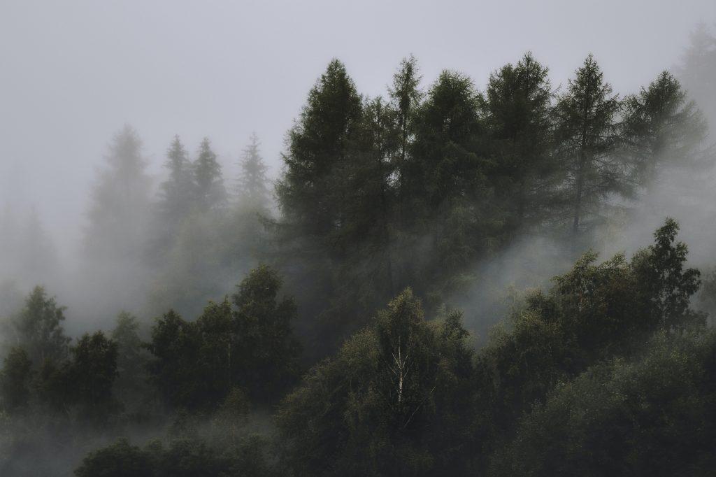 Gambar Hutan taiga sebagai penyumbang oksigen di dunia