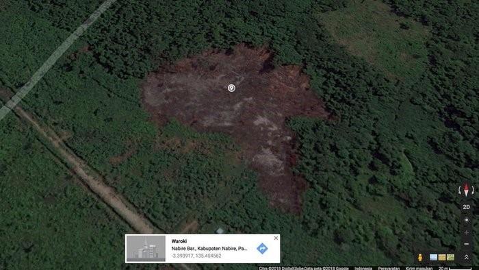 Kondisi Hutan Papua