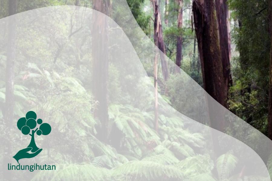 Kondisi dan Hal yang Menarik dari Hutan di Pulau Papua
