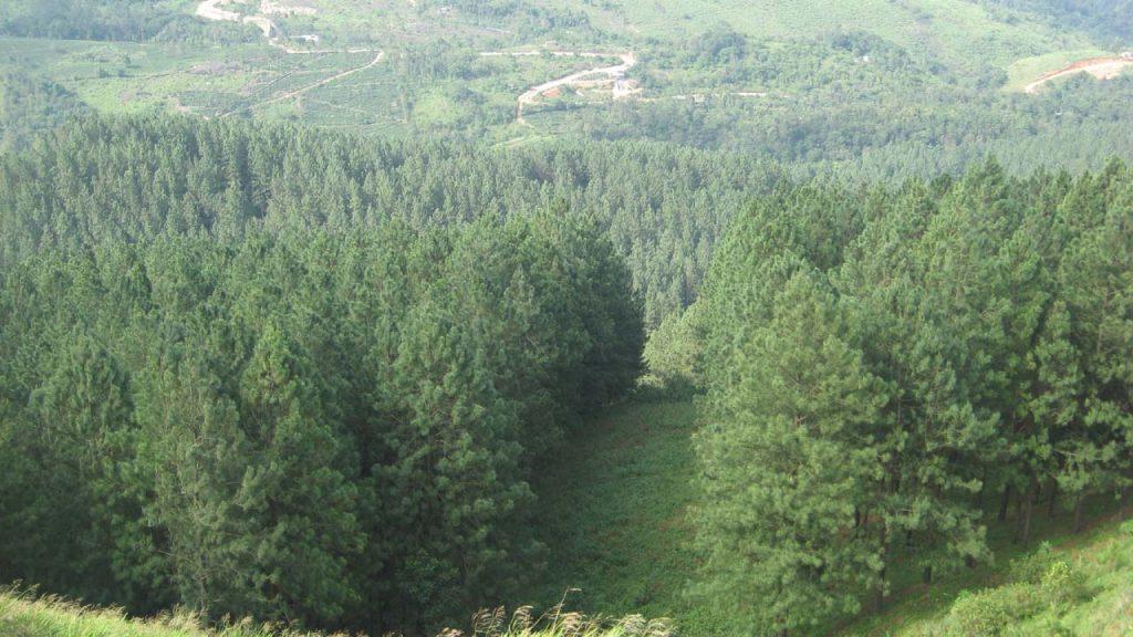 https://id.wikipedia.org/wiki/Hutan_musim