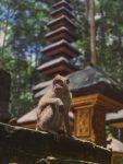 Hutan di Bali yang tak Kalah Eksotis dan Wajib dikunjungi