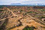 Deforestasi Hutan: Pengertian; Penyebab, dan Dampak
