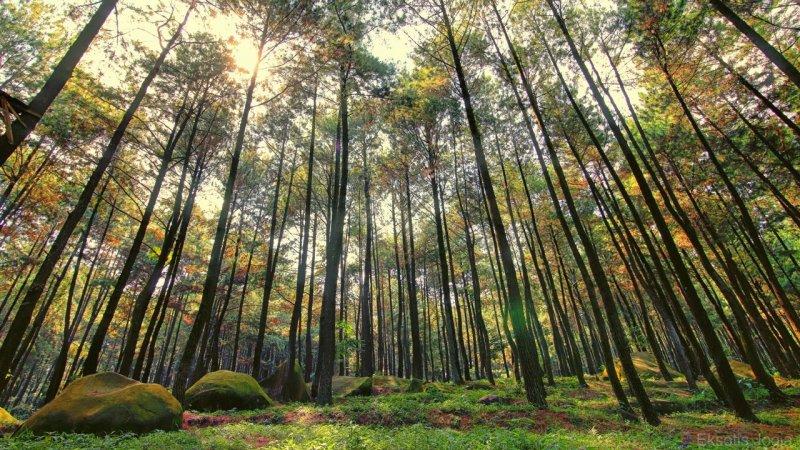 Tahura sebagai Sarana Konservasi Jenis Flora dan Fauna