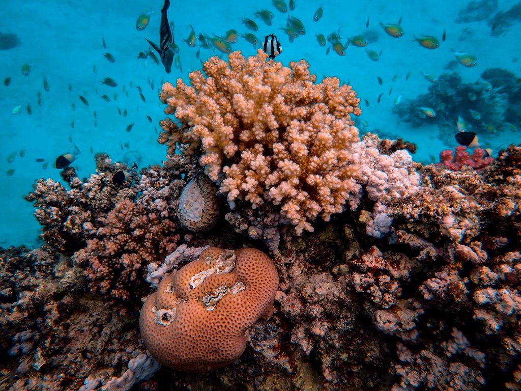Terumbu Karang 3 © Pexels.com