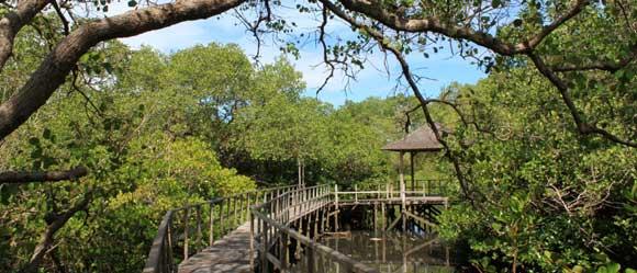 hutan-hutan di bali- Tahura Ngurah Rai