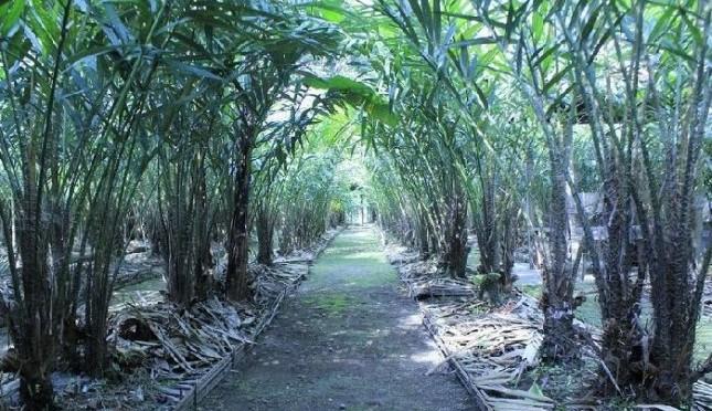 Gambar 5. Agrowisata Taman Turi. Sumber: https://www.agronet.co.id/detail/travela/agrowisata/3432-Petik-Salak-di-Agrowisata-Turi