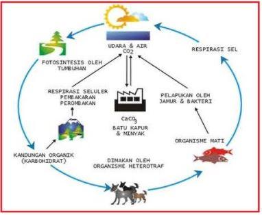 Gambar 3. Siklus Oksigen. Sumber: https://3.bp.blogspot.com/_Ejm99bhhv3g/TTO93RsczcI/AAAAAAAAAFs/ZhHi1itsC_g/s1600/Gbr.%2BSiklus%2BKarbon%2Bdan%2BOksigen%2Bdi%2BLingkungan.jpg