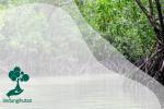 Potensi Karbon Biru Pesisir di Indonesia sebagai Upaya Menurunkan Emisi Karbon