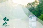 Hal Menarik dan Kondisi Hutan di Pulau Kalimantan