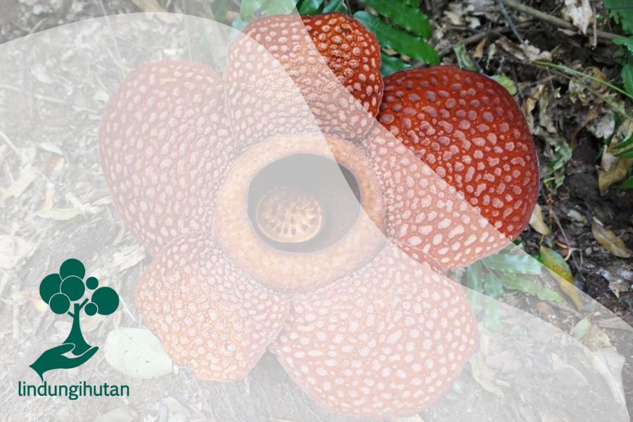 Kondisi dan Hal yang Menarik dari Hutan di Pulau Sumatera
