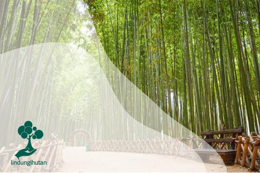 Mengenal Tanaman Bambu: Setangguh Baja, Sekuat Beton