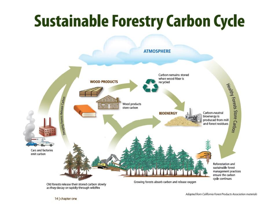Siklus Karbon Hutan Berkelanjutan © Sustainable Forestry Carbon Cycle