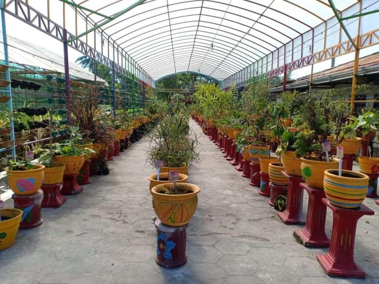Gambar 4. Merapi Farma Herbal. Sumber: https://merapifarmaherbal.com/tanaman-obat-2/