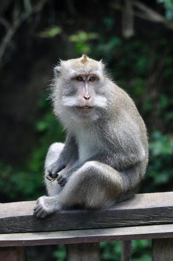 Gambar 7. Monyet. Sumber: unsplash.com
