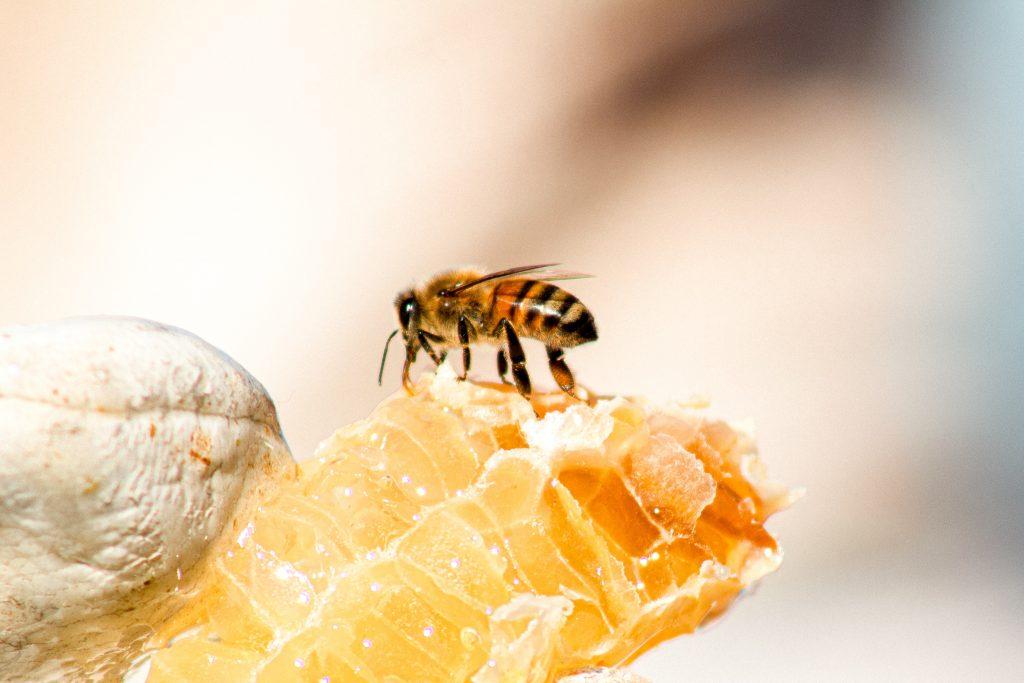 Gambar 6. Lebah memproduksi madu. Sumber: unsplash.com