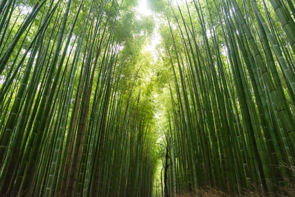 Gambar 2. Hutan Bambu. Sumber: unsplash.com