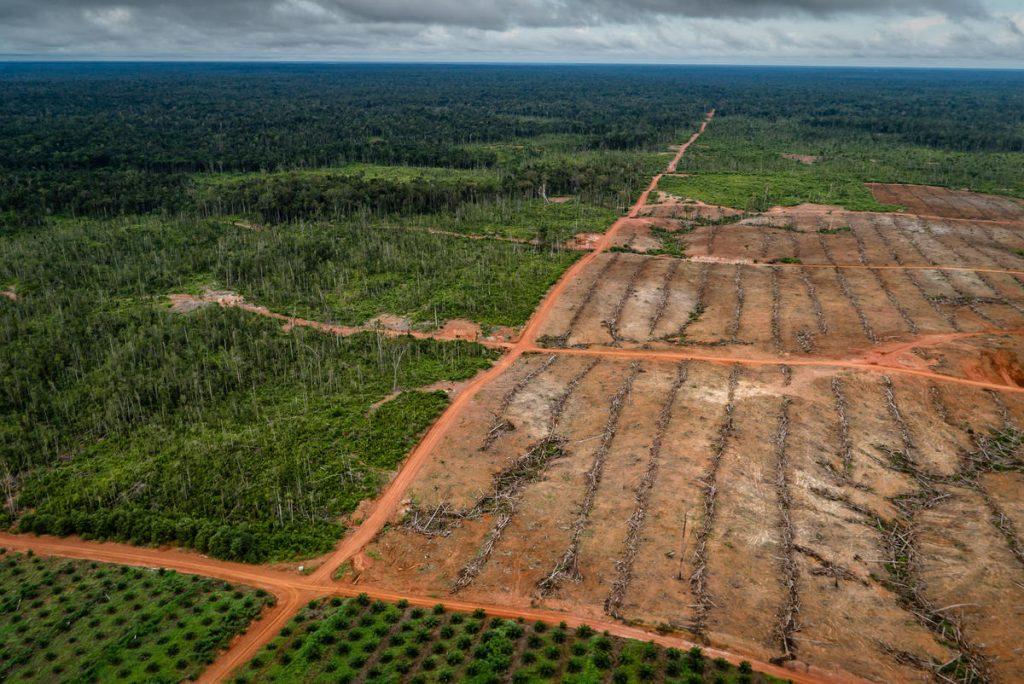 Gambar 2. PT Papua Agro Lestari