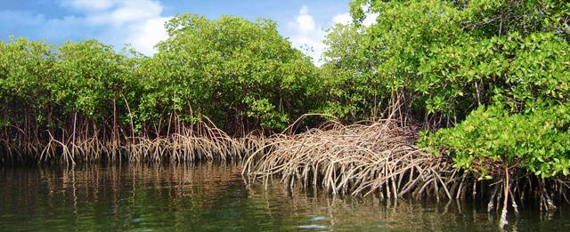 Gambar 2. Hutan Mangrove