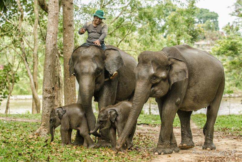 Gambar 2. Gajah Sumatera