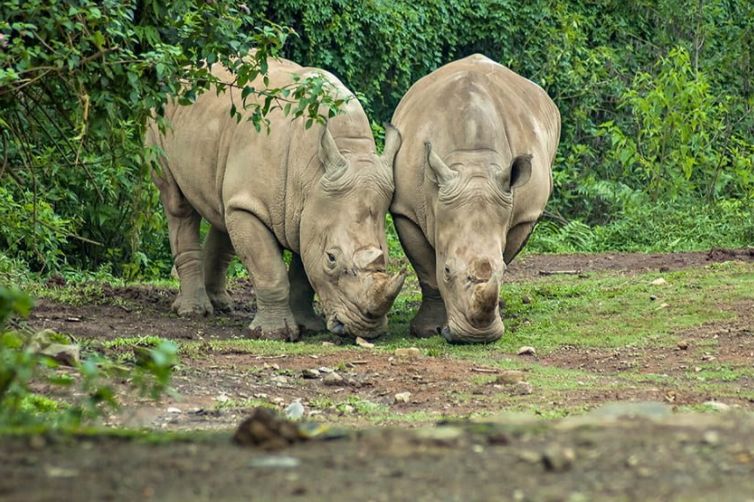 Taman Nasional Ujung Kulon, Habitat Terakhir Badak Jawa