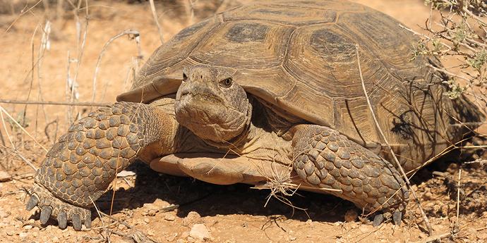 Hewan reptil, yaitu kura-kura