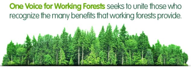 Gambar 1. Forest. Sumber: https://www.wfpa.org/homefeatures/blog/