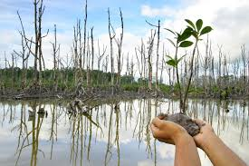 Gambar 1. Taman Mangrove