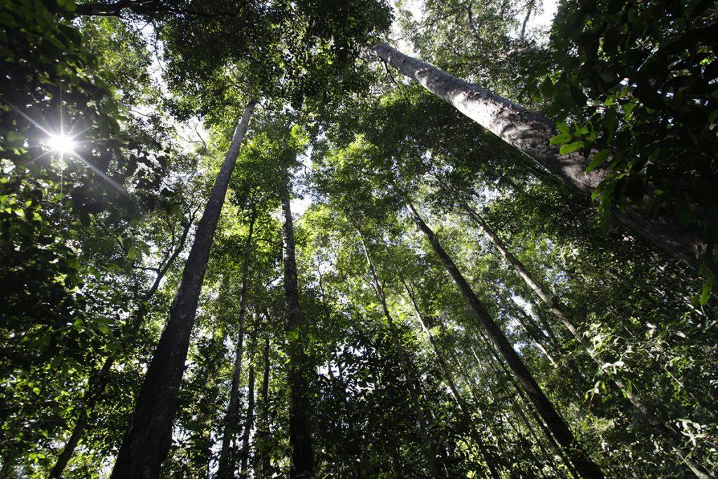 Gambar 1. Hutan Di Pulau Sumatra