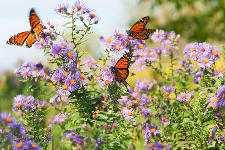 Gambar 1. Kupu-kupu berkumpul di halaman rumah