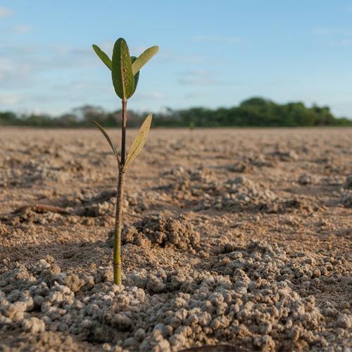 Gambar 1. Menanam Mangrove