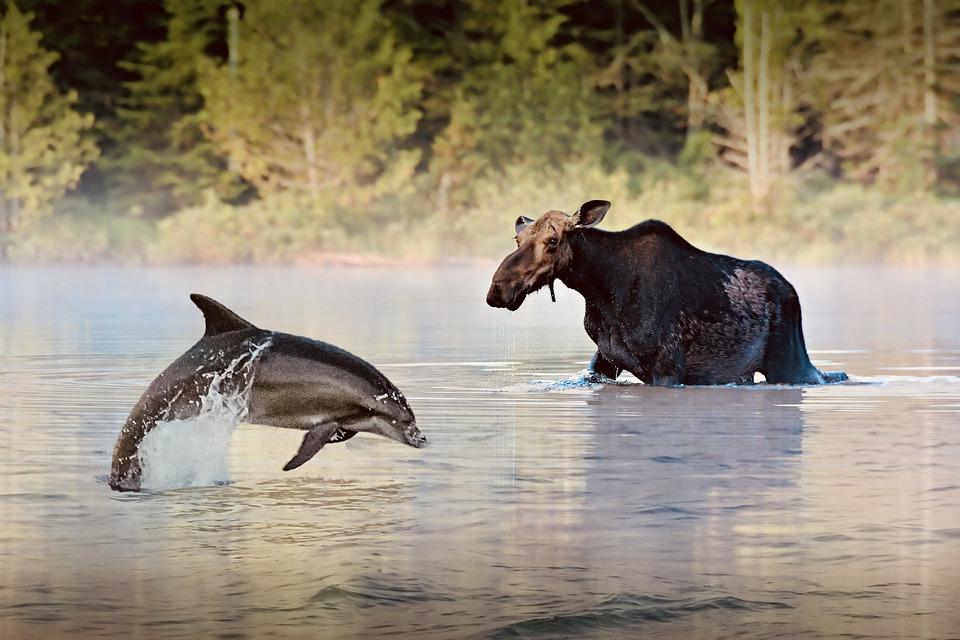 Gambar 2. Lumba-lumba dan Rusa Besar di Sungai