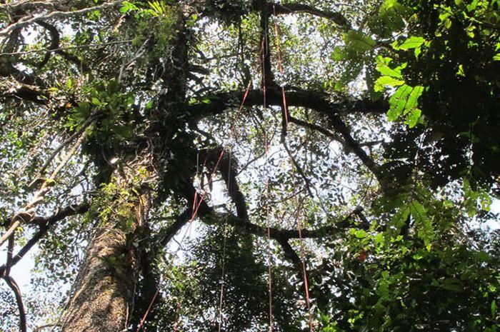 Gambar 2. Hutan Desa dan Hutan Adat Di Papua