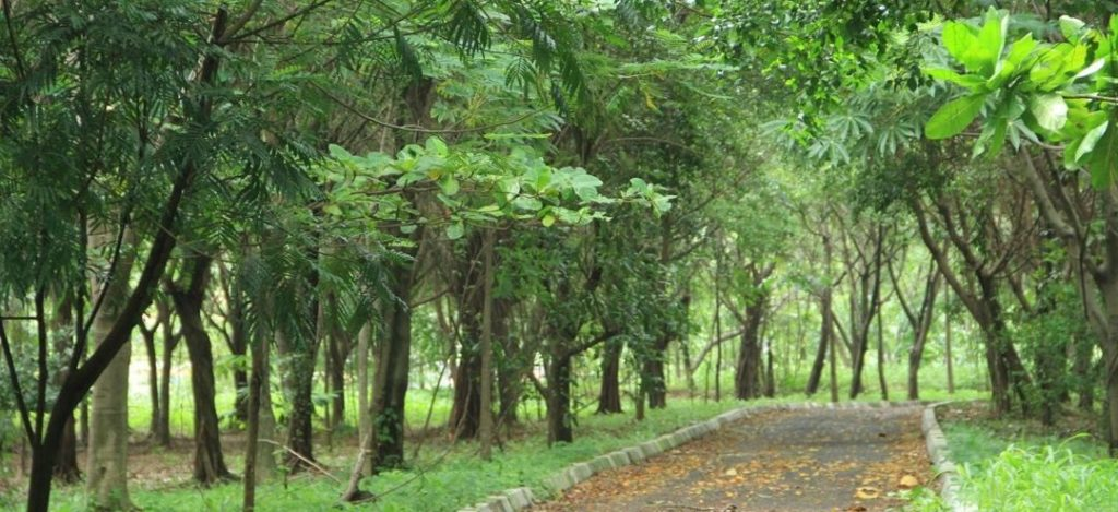 Gambar 2. Hutan Kota Kemayoran