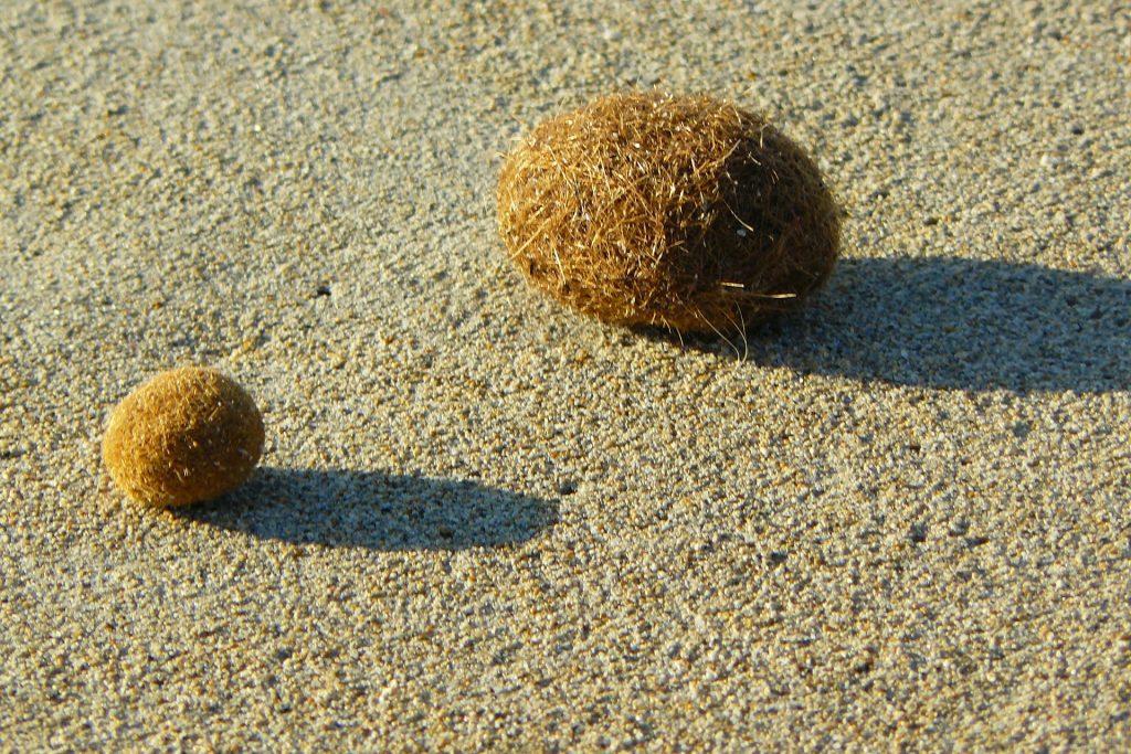 Flotsam Seagrass Balls, solusi sampah plastik