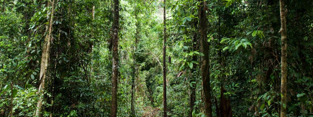 Gambar 3. Habitat Hutan