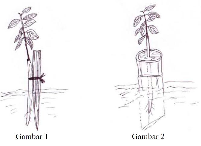 Gambar 3. Penyangga Bambu